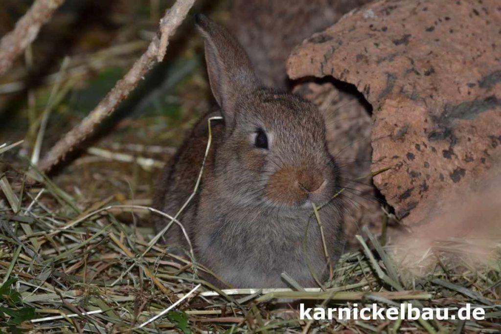 Kaninchenstall kaufen und dazugehöriges Kaninchen