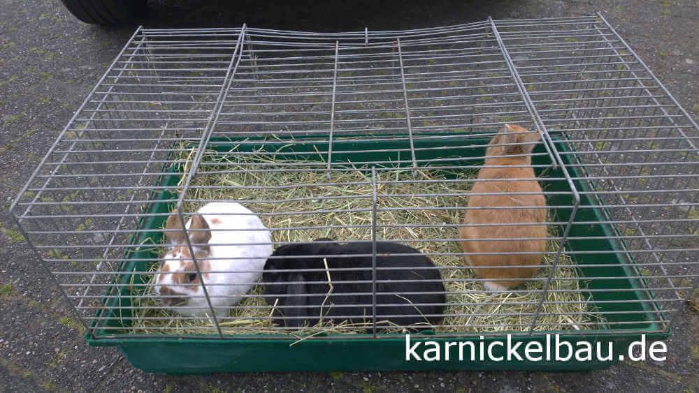 Kaninchen kaufen mit Kaninchenkäfig