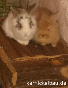 Kaninchen kuscheln auf ihrem Kaninchenhaus