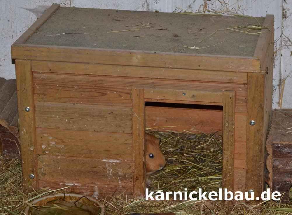 Kaninchenhaus Die Besten Hasenhauser Als Unterschlupf Neu