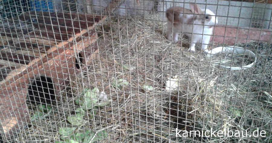 Kaninchenhaus im Freigehege