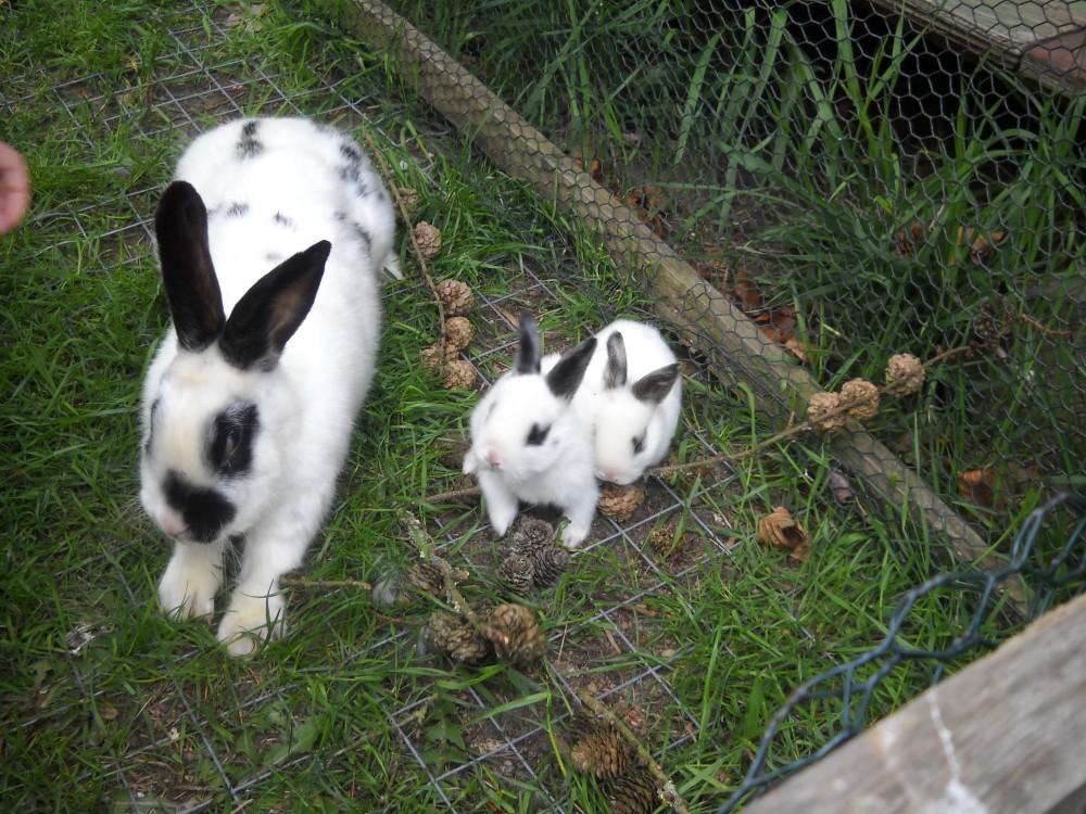 Kaninchenmama mit Babys – komprimiert